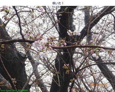 0320開花!.jpg
