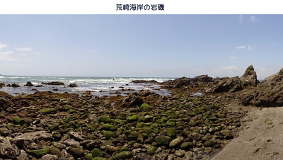 0519荒崎2.jpg