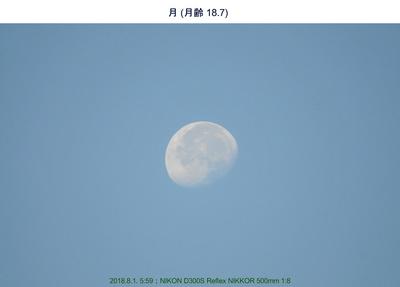 0801月-朝.jpg
