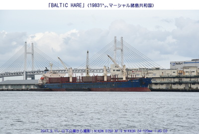 0911BALTIC HARE.jpg