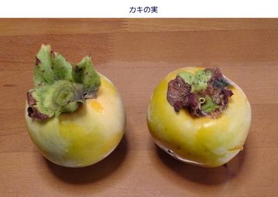 0923柿の実.jpg