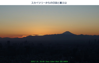 ツリーからの日没.jpg