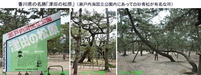 四国3日目松原1.jpg